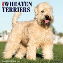 Image for Just Wheaton Terriers 2021 Wall Calendar (Dog Breed Calendar)