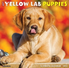 Image for Just Yellow Lab Puppies 2021 Wall Calendar (Dog Breed Calendar)