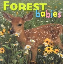 Image for Forest babies