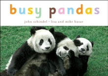 Image for Busy pandas