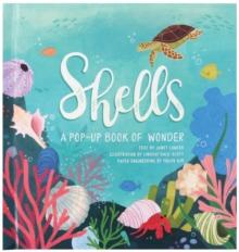 Image for Shells  : a pop-up book of wonder