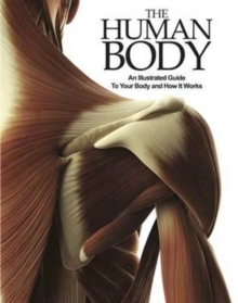 Image for The human body  : an illustrated guide to your body and how it works