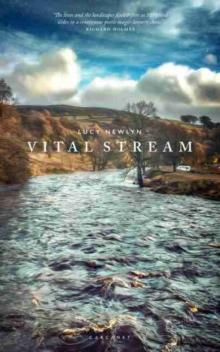 Image for Vital stream