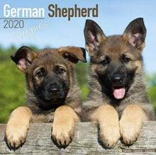German Shepherd Puppies Calendar 2020