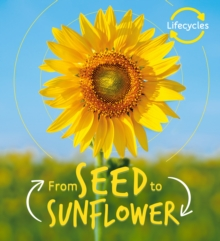Image for From seed to sunflower