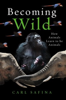 Image for Becoming wild  : how animals learn to be animals