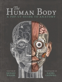 Image for The human body  : a pop-up guide to anatomy