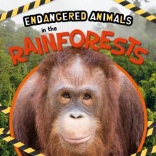 Image for In the rainforests