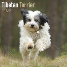 Image for Tibetan Terrier 2022 Wall Calendar
