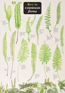 Image for A key to common ferns