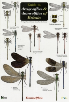 Image for Guide to the Dragonflies and Damselflies of Britain