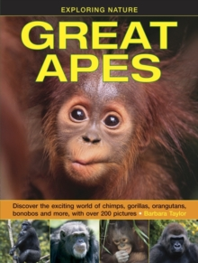 Image for Great apes  : discover the exciting world of chimps, gorillas, orangutans, bonobos and more, with over 200 pictures