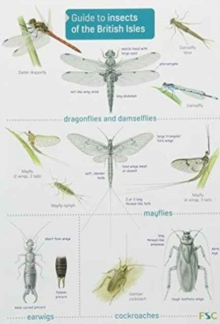 Image for Guide to Insects of the British Isles