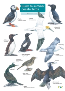 Image for Guide to Summer Coastal Birds