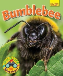 Image for Bumblebee
