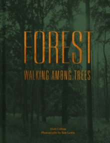 Image for Forest  : walking among trees