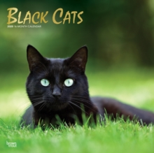 Image for Black Cats 2020 Square Wall Calendar