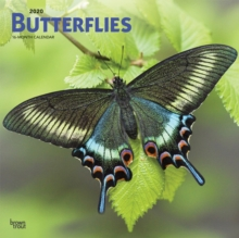 Image for Butterflies 2020 Square Wall Calendar