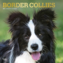 Image for BORDER COLLIES 2021 SQUARE FOIL