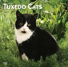 Image for TUXEDO CATS 2022 SQUARE